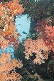 Kızıl deniz sualtı manzara — Stok fotoğraf