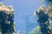 Röda havet koraller hus för fiskar — Stockfoto