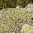 Lichen on mountain rocks view — Stock Photo