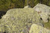 Liquen en montaña de rocas vista — Foto de Stock