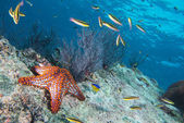 Sea stars in a reef colorful underwater landscape — Stockfoto