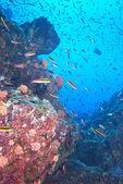 Inside a school of fish underwater — Stok fotoğraf