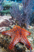 Sea stars in a reef colorful underwater landscape — Foto Stock