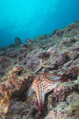 Sea stars in a reef colorful underwater landscape — Photo