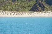 нижняя калифорния пляж — Стоковое фото