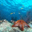 Sea stars in a reef colorful underwater landscape — Stock Photo