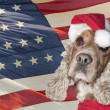 A santa dressed puppy dog christmas xmas — Stock Photo #35728801