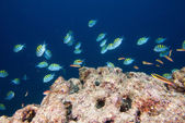 Reef colorful underwater landscape — Foto de Stock