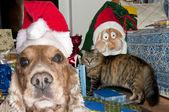 A santa dressed puppy dog christmas xmas — Foto de Stock