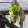A monkey while eating — Foto Stock