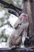 A monkey while eating — Foto de Stock