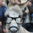 A donkey with glasses — Stock Photo