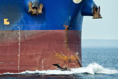 Delfín saltando sobre la proa de la nave — Foto de Stock
