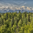 Denali Park Mount Mc Kinley panorama — Stock Photo