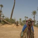 Постер, плакат: Amel sitting near Bedouin Oasis
