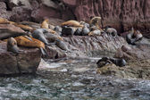 Sea lions seals relaxing in baja california — Stock Photo