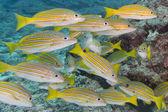 A school of fish underwater — Stock Photo