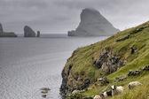 Sheep ram in far faer oer island landscape — Stock Photo