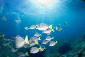 Uvnitř hejno ryb pod vodou — Stock fotografie