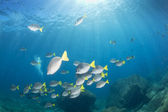 Inside a school of fish underwater — Stock Photo