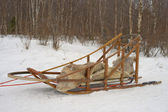 Sledding with sled dog in lapland in winter time — Foto Stock