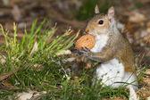 Squirrel portrait — Stock Photo