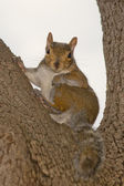 Squirrel portrait — Stock Photo