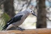 Sparrow při pohledu na vás — Stock fotografie