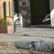 Seagull chase in portofino — Stock Photo #39745049