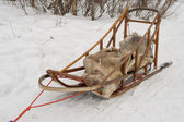 Isolated sled dog in lapland in winter time — Stock Photo