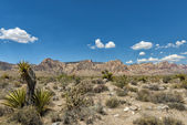 Arizona landscape view — Stock Photo