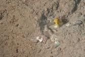 Simbyosis ryby i krewetki — Zdjęcie stockowe