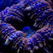 Stock Photo: Hard coral macro on night dive light