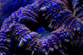 Hard coral macro on night dive light — Stock Photo