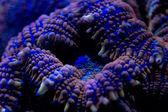 Hard coral macro on night dive light — Stock Photo