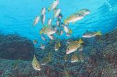 Inside a school of fish underwater — Stock Photo