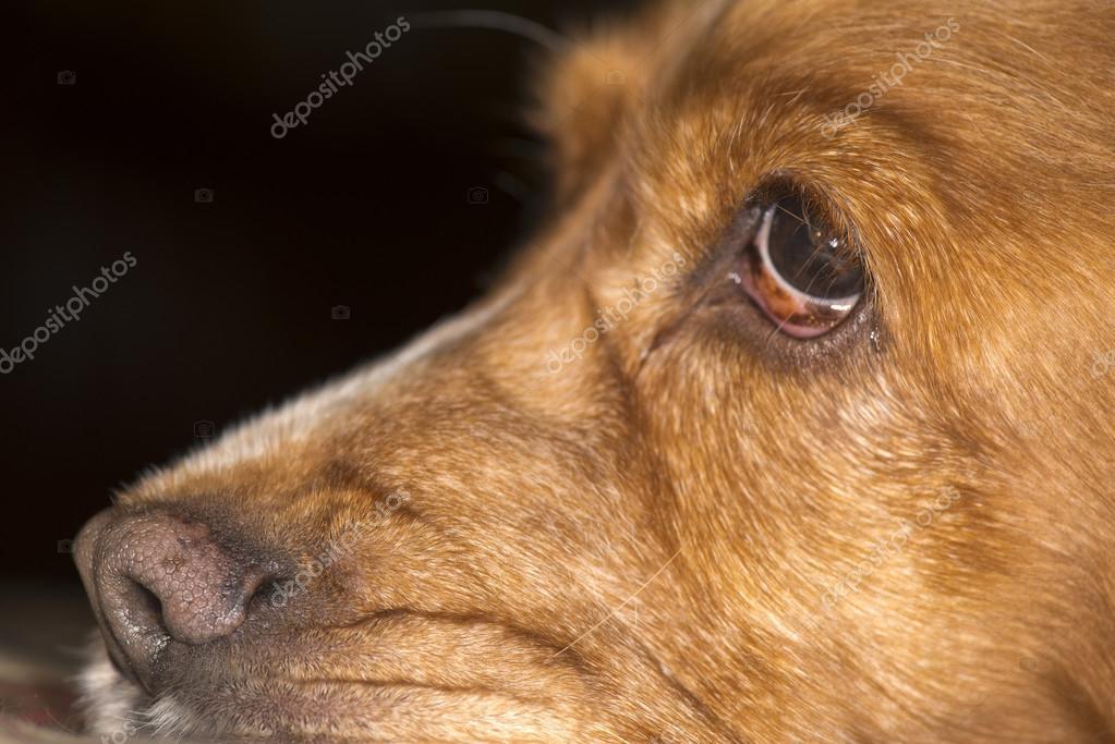 狗的鼻子宏 — 图库照片08izanbar#41663313
