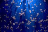Aquarium Jellyfish in the deep blue — Stock Photo