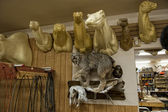 Alaskan Taxidermy shop — Stock Photo