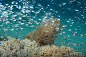 Glass fish on corals house for Fishes — Stockfoto