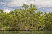 Siladen turkuaz tropik cennet Adası — Stok fotoğraf