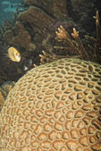 Hard coral detail — Stock Photo