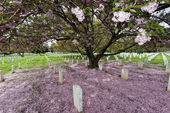 Arlington cemetery graveyard — Stock Photo
