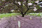Arlington cemetery graveyard — Stock Photo