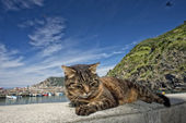Cat while resting in Vernazza harbor — Stock Photo