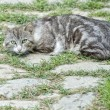 Grey and white cat looking at you — Stock Photo #47524575