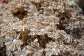 Hard coral detail — Stock Photo