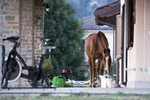 Horse outside the house — Stock Photo