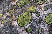 Green spots of lichen on the rock — Stock Photo