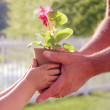 Hands man and baby holding a flower in the pot — Stock Photo